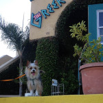 Bunny's Dog Friendly Ventura The Greek