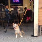 Bunny's Dog Friendly Ventura the Boatyard Cafe
