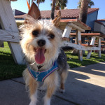 Bunny's Dog Friendly Ventura Harbor Cove Cafe